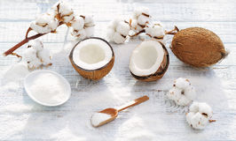 Coconut and cotton flowers Stock Images