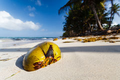 Coconut on a deserted beach Royalty Free Stock Images