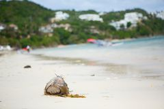 Coconut on Diniwid beach, Boracay, Philippines Stock Photos