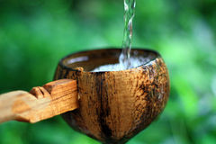 Coconut dipper. Pouring water from Coconut dipper in front of a Nature background Stock Image