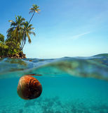 Coconut drifts on water surface and coconut trees Royalty Free Stock Photos