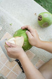 Coconut drink tear apart fruit inside peel concept Royalty Free Stock Image