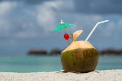 Coconut with drinking straw on beach at the sea Stock Images