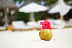 Coconut with drinking straw on tropical beach Stock Images