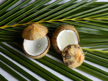 Coconut Drinks Stock Photo
