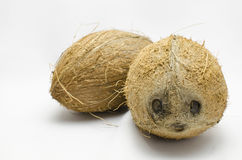 Coconut faces. Two brown coconut faces on white background Stock Photos