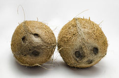 Coconut faces. Two brown coconut faces on white background Royalty Free Stock Photo