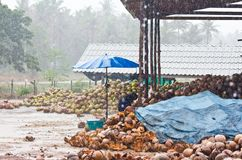 Coconut factory Royalty Free Stock Photos
