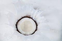 Coconut falling into milk splashes Stock Photo