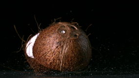 Coconut falling and splitting on black background stock footage