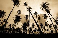 Coconut farm Royalty Free Stock Photo