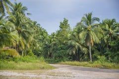 Coconut farm in Thailand. Stock Photo