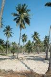 Coconut farm Stock Photos