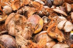 Coconut fiber. Stock Photo