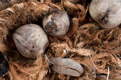 Coconut fiber Royalty Free Stock Photography