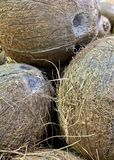 Up close and personal with hairy coconuts stock image