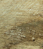 Coconut fiber texture Royalty Free Stock Image