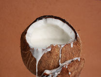 Coconut filled with coco milk Stock Photography
