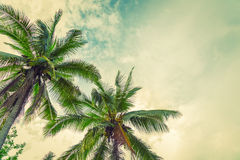 Coconut  ( Filtered image processed vintage effect. ) Royalty Free Stock Image