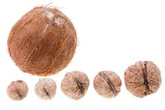 Coconut and five walnuts, isolated on white Royalty Free Stock Image