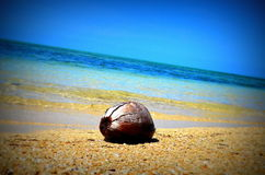 Coconut floating in the Ocean Stock Photos