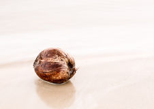 Coconut floating in very calm shallow sea Stock Photography