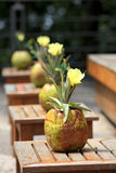 Coconut flower pots Royalty Free Stock Photography