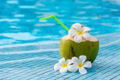 Coconut and flowers of plumeria Stock Photography