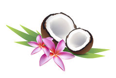 Coconut with frangipani Stock Photo