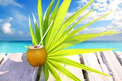 Coconut fresh in caribbean sea pier chit palm leaf. Tropical topic royalty free stock photography