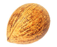 Coconut. Fresh coconut over white background Royalty Free Stock Photo