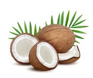 Coconut. Fresh tropical opened coco fruit with milk and palm green leaves vector natural dessert. Coconut fruit and green leaf palm, exotic coco illustration royalty free illustration
