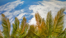Coconut Fronds Stock Photos