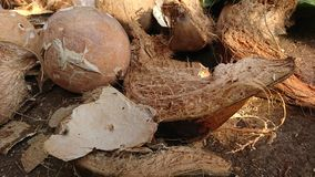 Coconut Fruit And Coconut Fiber Are Scattered On The Floor Royalty Free Stock Photography