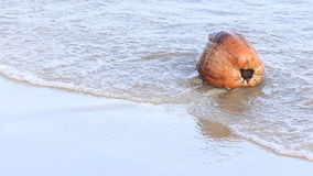Coconut fruit on beach daylight time stock video
