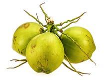 Coconut fruit isolated Royalty Free Stock Photo