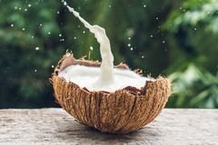 Coconut fruit and milk splash inside it on a background of a pal. M tree Stock Photos