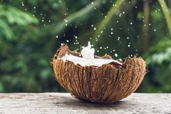 Coconut fruit and milk splash inside it on a background of a pal. M tree Royalty Free Stock Photography