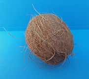 Coconut fruit over light blue background Royalty Free Stock Photography