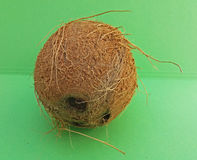 Coconut fruit over light green background Royalty Free Stock Images