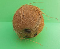 Coconut fruit over light green background Stock Photos