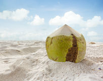 Coconut fruit on the sand beach Stock Images