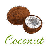 Coconut fruit vector icon Stock Images
