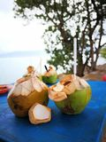 coconut fruits Royalty Free Stock Image