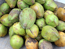 Coconut. Fruits, Cocos nucifera, multipurpose plant with young fruits yielding cooling drink, copra in puddings and seasoning, husk for stuffing royalty free stock photo