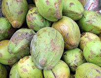 Coconut. Fruits, Cocos nucifera, multipurpose plant with young fruits yielding cooling drink, copra in puddings and seasoning, husk for stuffing stock photography