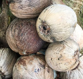 Coconut fruits at market Royalty Free Stock Images