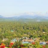 Coconut garden Royalty Free Stock Photo