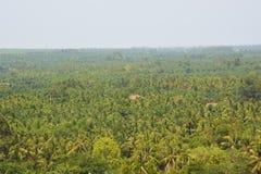 Coconut garden Stock Images