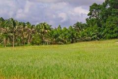 Coconut garden, Stock Images